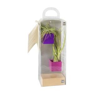 Sada 2ks malých magnetických květináčů s podstavcem a rostlinami, fialová