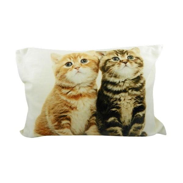 Polštář Two Kittens British Shorthair 50x35 cm