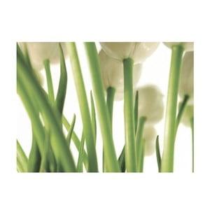 Obraz na plátně Tulipány, 80x60 cm