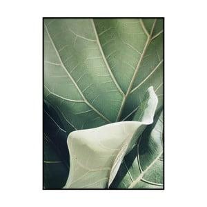 Plakát Imagioo Fig Tree, 40x30cm