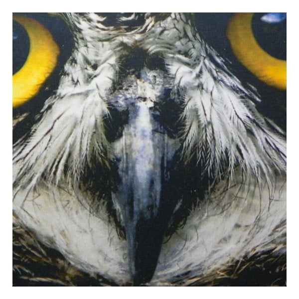 Polštář Owl 60x40 cm