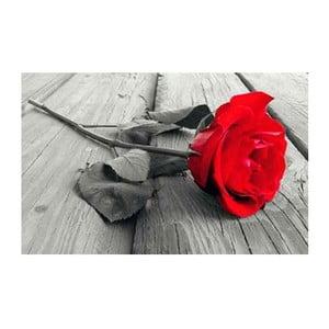 Fotoobraz Red Rose