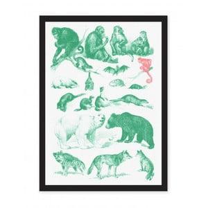 Plakát Ohh Deer Collection Of Mammals, 29,7 x 42 cm