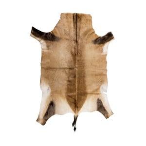 Blană de antilopă africană Blesbok, 95 x 80 cm, maro