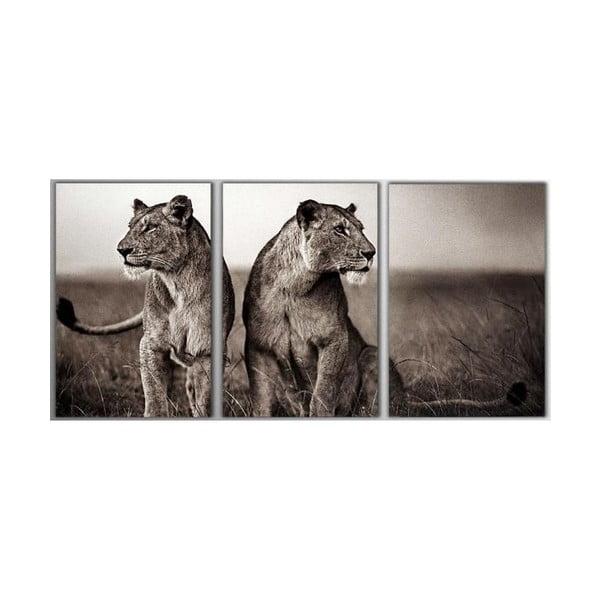 3dílný obraz Lions, 45x90 cm