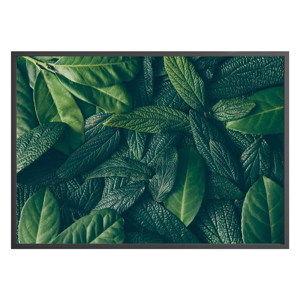 Nástěnný obraz CANOPY, 40x50cm