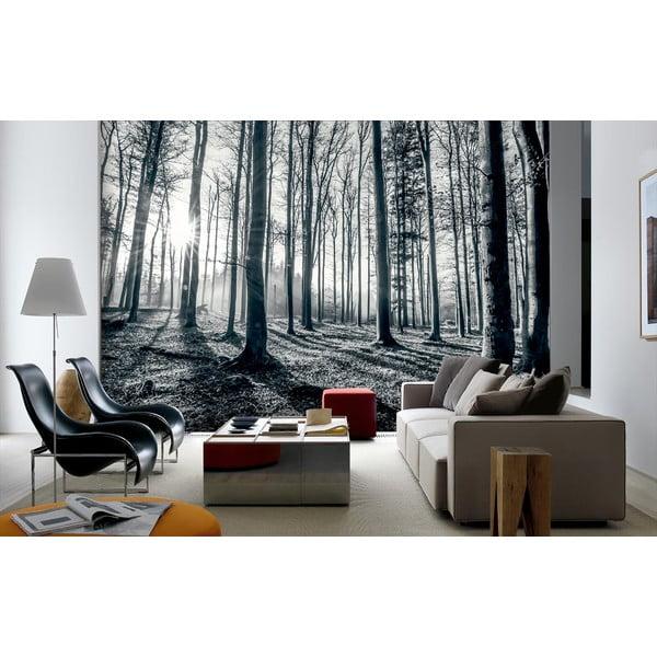 Velkoformátová tapeta Hluboký les, 366x254cm