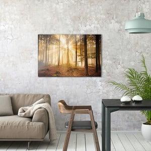 Skleněný obraz OrangeWallz Forest, 60 x 90 cm