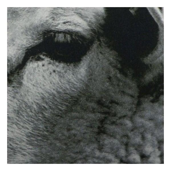 Polštář Sepia Sheep White 50x35 cm