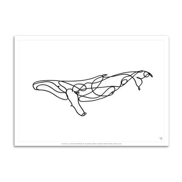 Plakát Humpback Whale