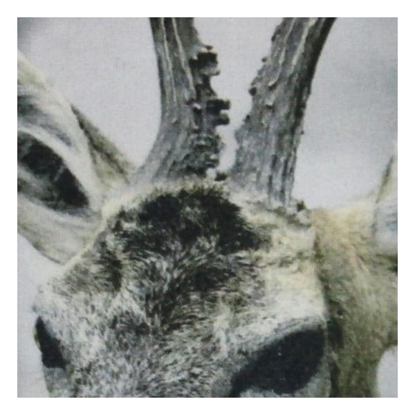 Polštář Christmas Roe 50x50 cm
