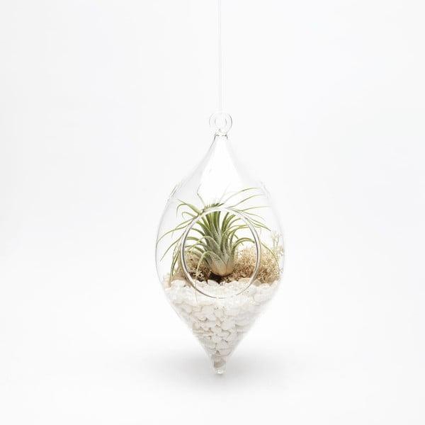 Závěsné terárium s rostlinami Urban Botanist Icile