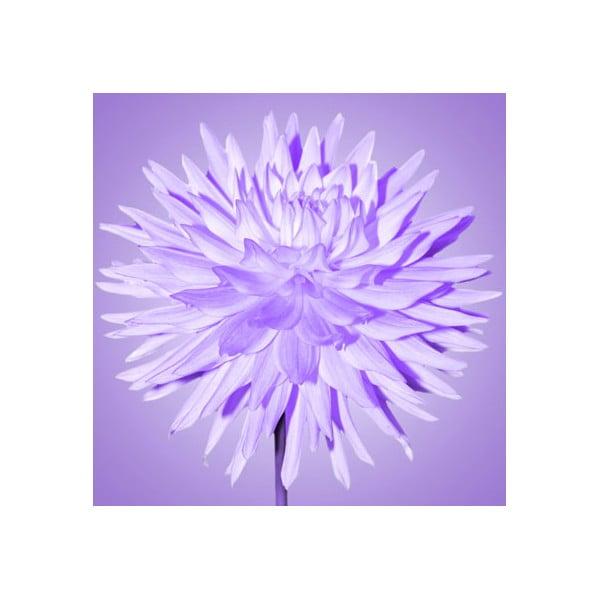 Set obrazů na skle Chomáčky květu, 20x20 cm, 2 ks