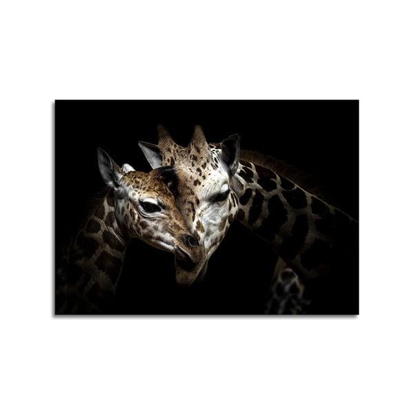 Obraz Styler Glas Animals Giraffe, 70 x 100 cm