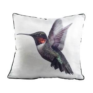 Polštář Fisura Hummingbird, 45x45 cm