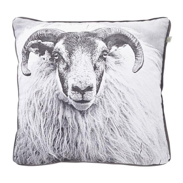 Polštář Sheep Charcoal, 45x45 cm