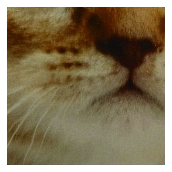 Polštář Cat Tabby, 50x50 cm