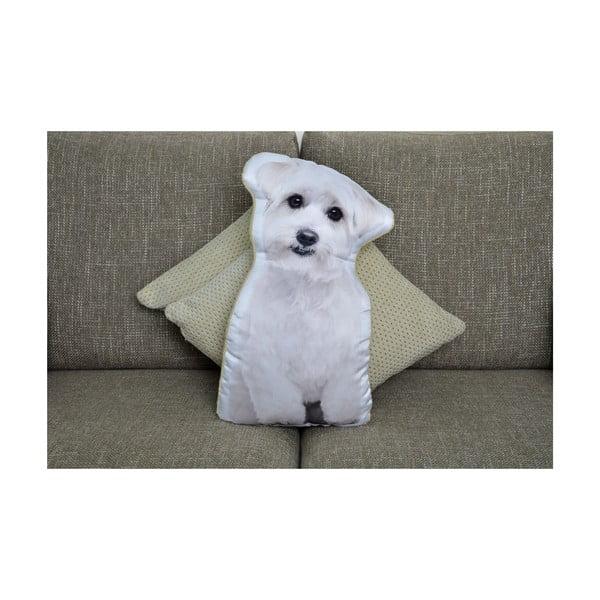 Polštářek Adorable Cushions Maltézáček
