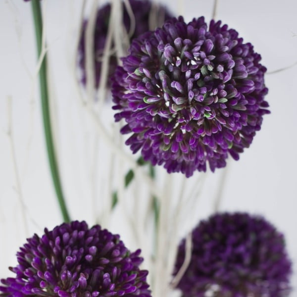 Květinová dekorace od Aranžérie, sada květináčů s ozdobným česnekem