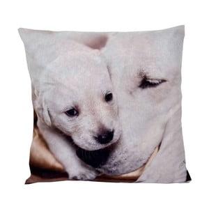Polštář Animals Dog, 42x42 cm