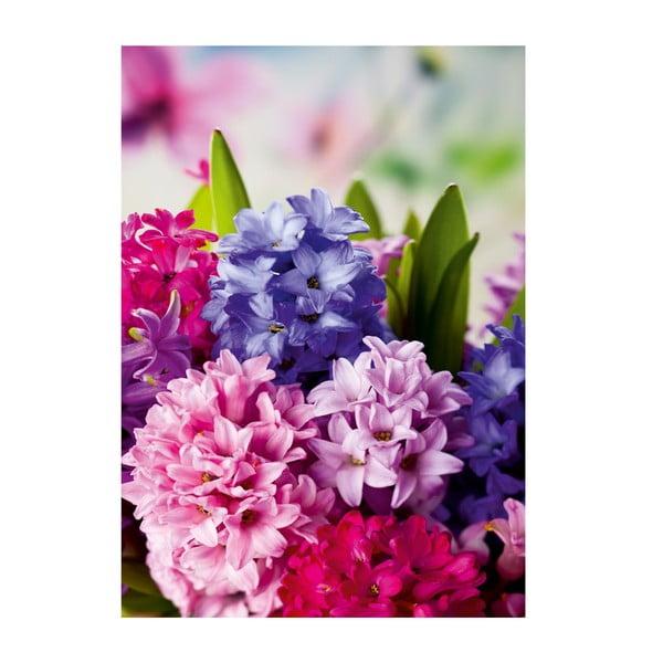 Obraz Růžová a fialová, 70x100 cm