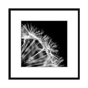 Obraz Styler Artbox Dandelion, 50 x 50 cm