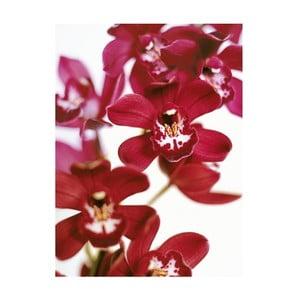 Obraz na plátně Orchideje, 100x70 cm