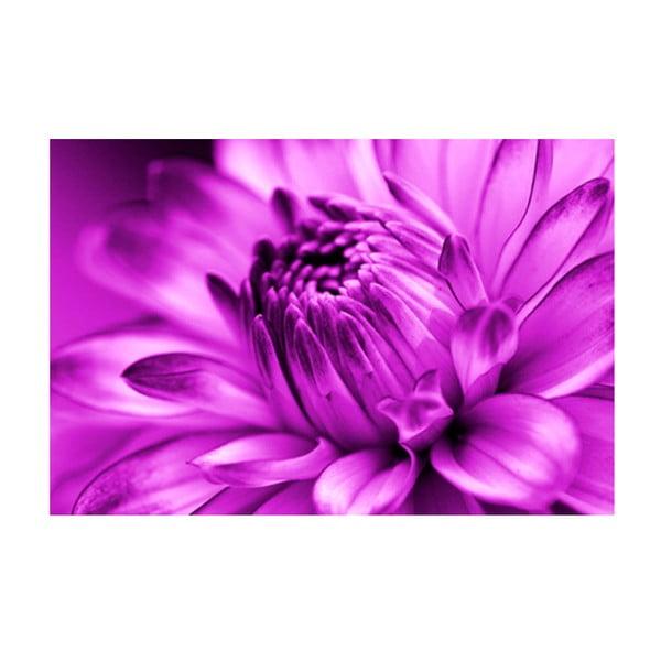 Obraz na skle Fialová květina, 40x60 cm
