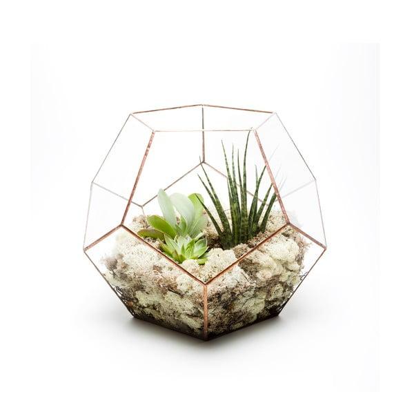 Terárium s rostlinami Urban Botanist Supersize Penta, světlý rám