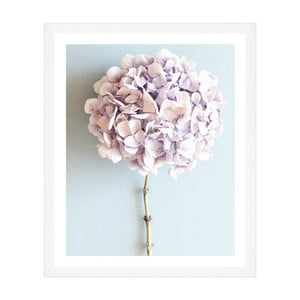 Obraz Global Art Production Mauve Hydrangea, 50 x 60 cm