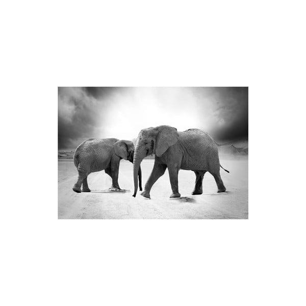 Obraz Elephants, 80x115 cm