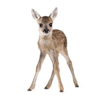 Autocolant pentru perete Dekornik Deer Lucy 55 x 88 cm