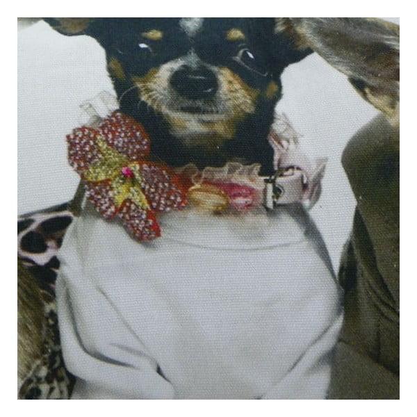 Polštář Chihuahuas 35x50 cm