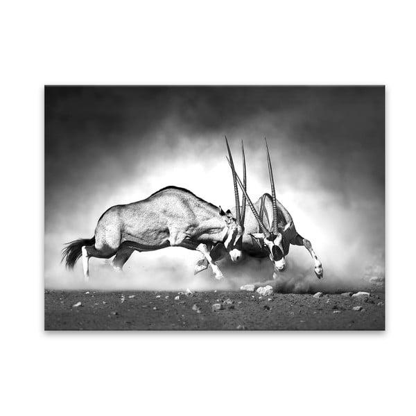 Glas Animals Gazelle kép, 70 x 100 cm - Styler