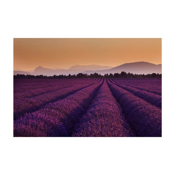 Velkoformátová tapeta Levandulové pole, 315x232 cm