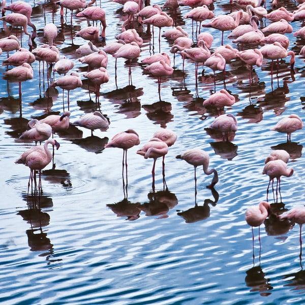 Skleněný obraz Pretty Flamingo 50x50 cm
