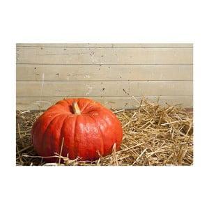 Vinylový koberec Pumpkin, 52x75 cm