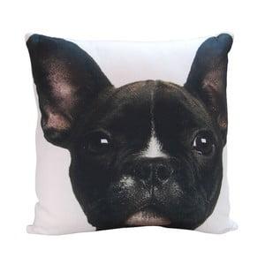 Polštář Black Puppy, 45x45 cm