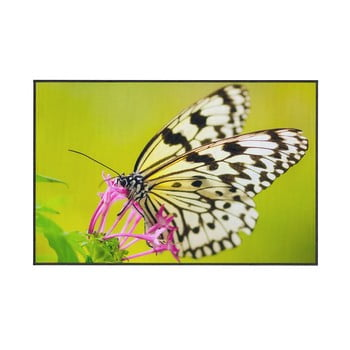 Covor Oyo home Butterfly, 140x220cm, verde de la Oyo home