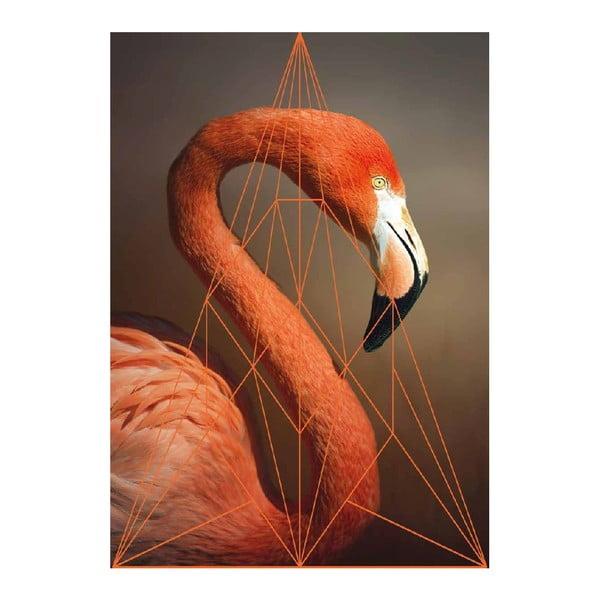 Plakát Flamingo Portrait, A3