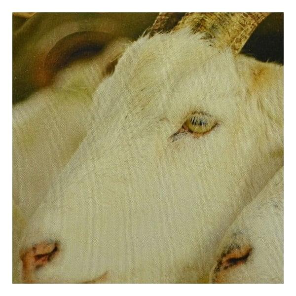 Polštář White Goats 60x40 cm