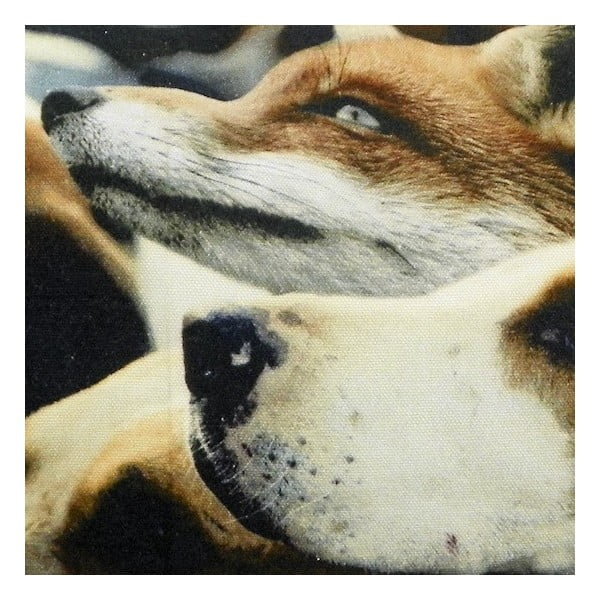 Polšář Fox Hounds 50x35 cm