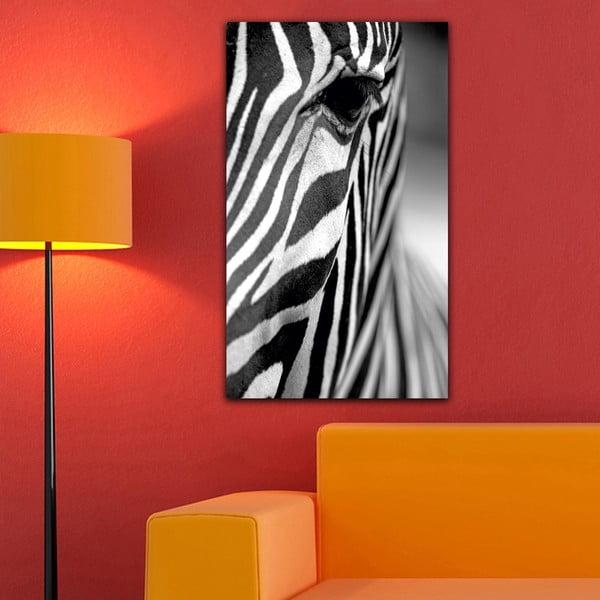 Obraz Black&White Zebra,41x70cm