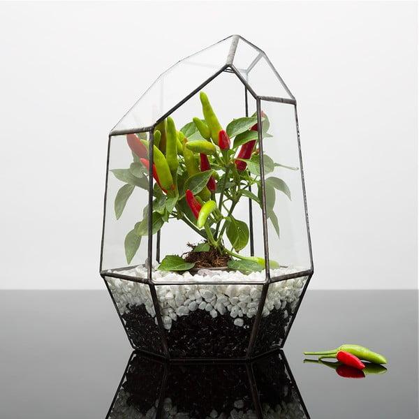 Terárium s rostlinami Urban Botanist Chilli Aztec Gem, tmavý rám