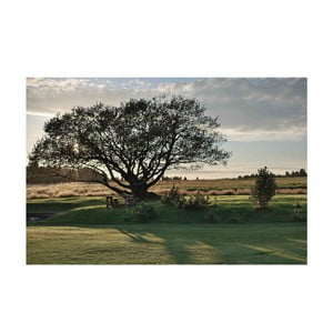 Autorská fotografie Petra Hricka - Tree, vel. A1