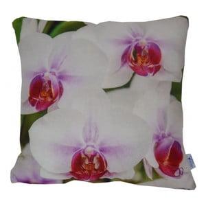 Polštář Orchids, 42x42 cm