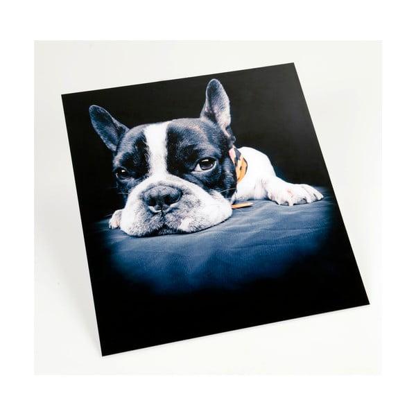 Obraz na plexiskle Puppy Dog