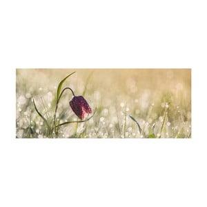 Skleněný obraz DecoMalta Tulip, 125x50cm