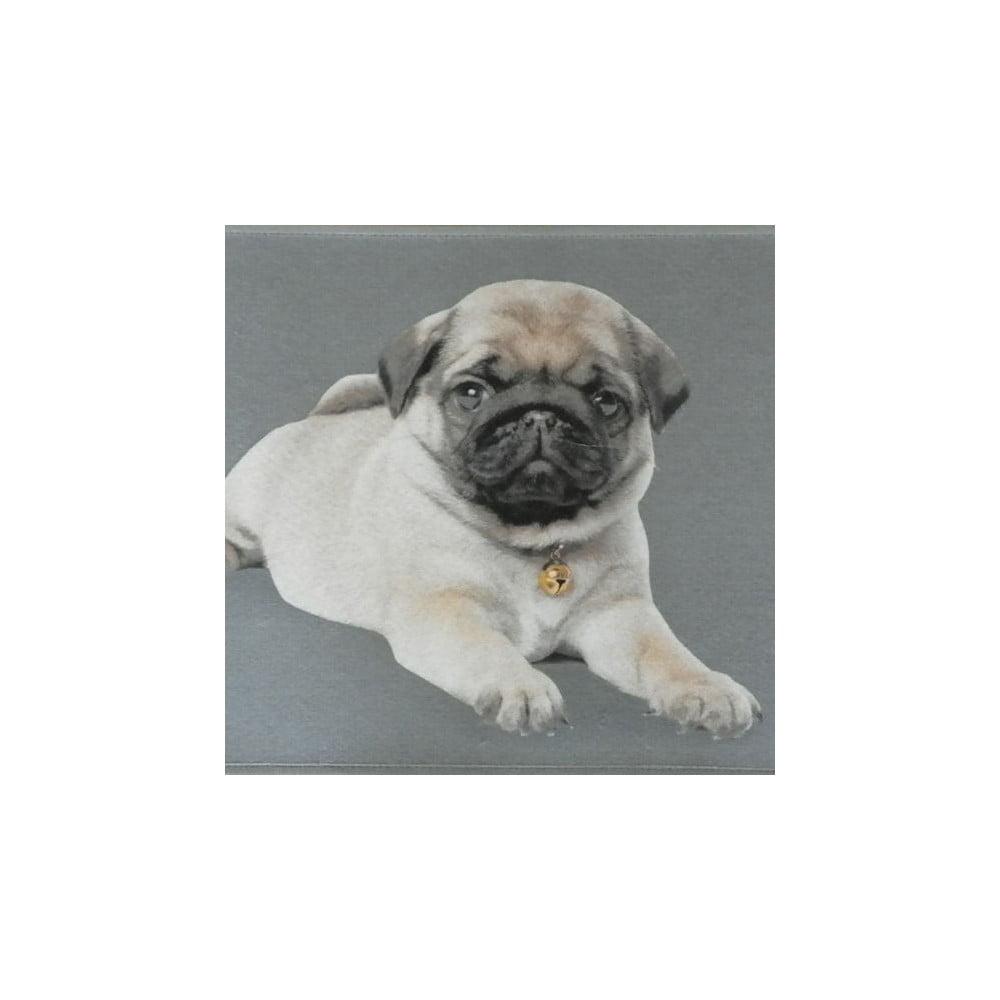 covora mars more pug pup 75 x 50 cm bonami. Black Bedroom Furniture Sets. Home Design Ideas