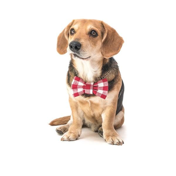Červeno-bílý károvaný charitativní psí motýlek Funky Dog Bow Ties, vel. M